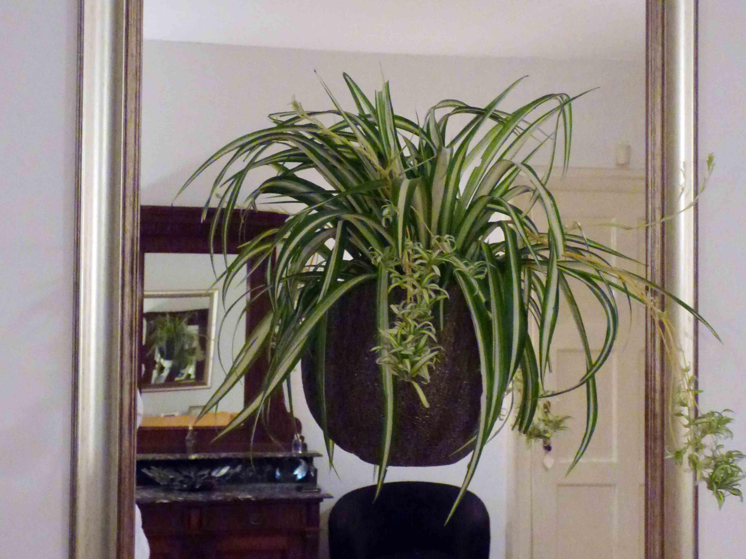 Herbadesign cvjetna ogledala sa živom biljkom u tegli