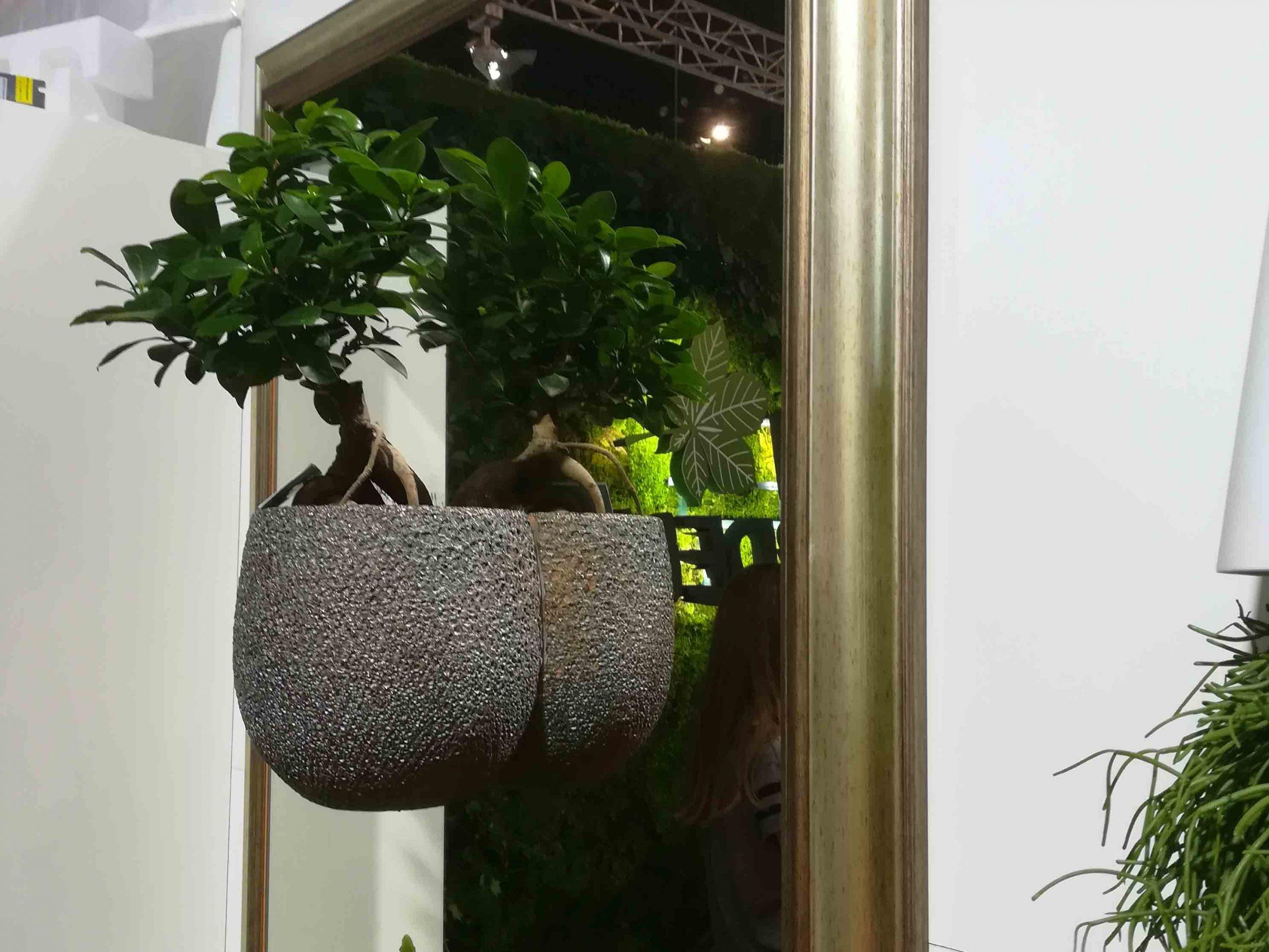Herbadesign cvjetno ogledalo sa živom bonsai biljkom u tegli
