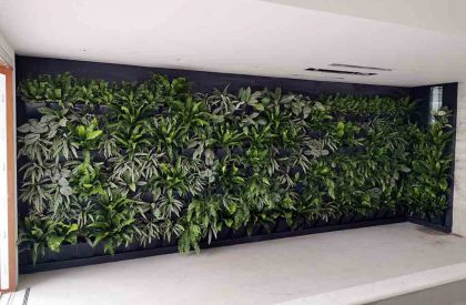 Vertikalni zeleni zid Herbadesign uz unutrašnji bazen vile u Dubrovniku